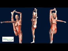 How to Bow and Arrow Cheerleading Muscle Anatomy Cheer EasyFlexibility - YouTube