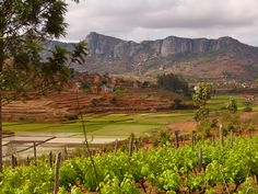 Wein- und Reisanbau bei Fianarantsoa