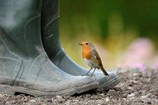 RSPB Images - Search