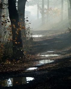 Take me for a Walk in the Woods .