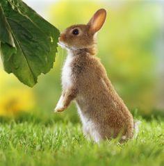 Conigli da compagnia