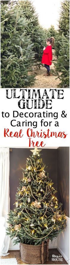 The Ultimate Guide to Decorating and Caring for a Real Christmas Tree | blesserhouse.com - A step-by-step guide for decorating a real Christmas tree like a pro and how to take care of it to make it last throughout the holiday season. #realchristmastree #livechristmastree #christmastree #treedecor