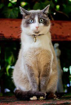 #cute #kitten #funny #cats