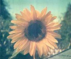 sun-prickling