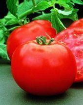 A very useful assortment of tips for growing tomatoes. Having your own garden is a great way to ensure eating healthy and saving money #Howtogrowvegetablesinyourowngarden