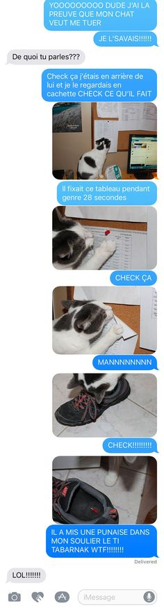Murderous cat: proof by this Frenchman (probably from Quebec. Funny Texts, Funny Jokes, Hilarious, Funny Images, Funny Pictures, Friendzone, Memes, Funny True Quotes, Funny Messages