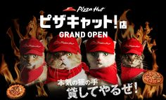 ピザキャット!店 GRAND OPEN, Pizza cats movie