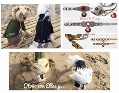 Chic fashion for pets Chic, Movies, Movie Posters, Art, Fashion, Dogs, Shabby Chic, Art Background, Moda