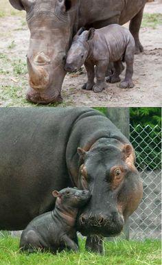 Baby Rhino & Baby Hippo