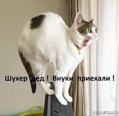 коты и котята,а еще кошки и котяры! Обосратушки!