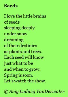 A winterspring poem about seeds.  How DO they know what they will be?  From The Poem Farm, a home and classroom blog full of poems, poem mini lessons, and poetry teaching ideas. www.poemfarm.amylv.com  ('So grateful to any and all who share this site along!)
