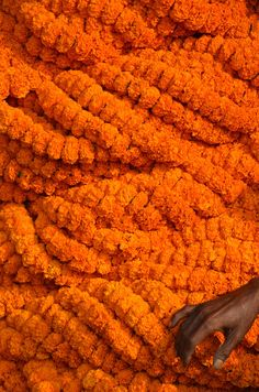 Marigolds at the Flower Market, Calcutta. India