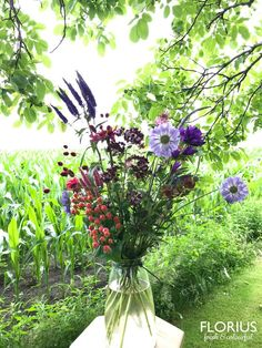 Summertime, Bouquets, Plants, Outdoor, Outdoors, Bouquet, Bouquet Of Flowers, Plant, Outdoor Games