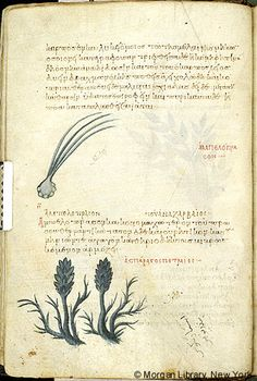 De materia medica, MS M.652 fol. 12v - Images from Medieval and Renaissance Manuscripts - The Morgan Library & Museum