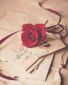 Red rose and love letters Flor Iphone Wallpaper, Rose Wallpaper, Trendy Wallpaper, Cute Wallpapers, Old Letters, Love Images, Beautiful Roses, Creative Photography, Rose Photography