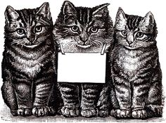 The Graphics Fairy: cats label