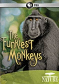 Cover image for The funkiest monkeys