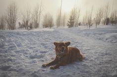 Kutyával a hóban: Magas-Tátra, Szlovákia - dogventure.hu Hiking Dogs, Marvel, Animals, Animales, Animaux, Animal, Animais