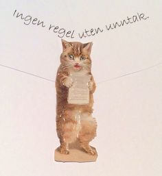 Nordisk ordtak Cats, Animals, Gatos, Animais, Animales, Animaux, Animal, Kitty, Serval Cats