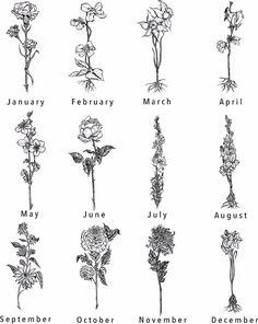 Birth Flower Tattoo Hand drawn Birth Flower tattoos Jan F. - Birth Flower Tattoo Hand drawn Birth Flower tattoos Jan F Finger Tattoo - Aster Tattoo, Aster Flower Tattoos, Larkspur Tattoo, Marigold Tattoo, Birth Flower Tattoos, Flower Tattoo Designs, Hand Tattoos, Dainty Tattoos, Unique Tattoos