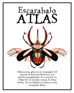 Atlas Flight - Leticia Gamboa