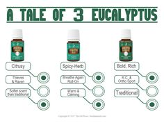 An informational card for sharing and& educating potential or current members about the three different types of eucalyptus essential oils Young Living offers. Types Of Eucalyptus, Eucalyptus Oil, Eucalyptus Essential Oil, Young Living Oils, Young Living Essential Oils, Young Living Eucalyptus, Oils For Life, Yl Oils, Essential Oil Diffuser Blends