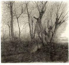 Livio Ceschin (Italian, b. Caravaggio, Pencil Drawings, Art Drawings, Etching Prints, Tree Illustration, Landscape Drawings, Salvador Dali, Tree Art, Printmaking