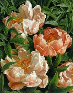 Peonies - 'Coral Charm' 2013 by Mia Tarney