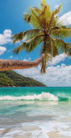 Pic of the Day...Tropical Vision  ----------------- #beach #tropics #escape #paradise #beaches #travel