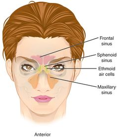 Remedies For Sinus Infection sinus pressure points in 19 ways to improve sinus congestion - If you are like us, sinus congestion is an annoying part of life. To help, we put together this handy list of natural remedies for sinus congestion. Remedy For Sinus Congestion, Home Remedies For Sinus, Sinus Infection Remedies, Remedies For Tooth Ache, Congestion Relief, Natural Headache Remedies, Health Remedies, Herbal Remedies, Sinus Pressure Headache