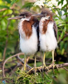 Love them #love #bird #animals