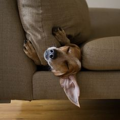 Maddie - cool dog! Love it. http://maddieonthings.com/post/38229040127/couch-brooklyn-ny