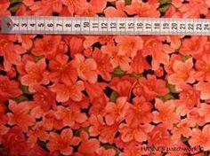 Rød blomster på Patchworkstof - er et meget flot patchworkstof med røde blomster