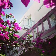 Instagram Photo Feed on the Web (Belvedere Hotel Mykonos) photo credits: @Nikos Skamnakis Mykonos, Photo Credit, Pictures, Instagram, Photos, Paintings