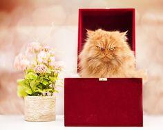 是什麼原因讓它如此生氣?這隻小貓因有著天生憤怒的表情走紅網絡… 1