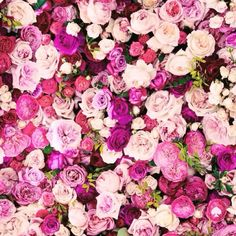 Image via We Heart It https://weheartit.com/entry/155797784 #background #enjoy #flowers #garden #girly #love #pink #rosa #rose #spring #summer #sweet #tumblr #vintage #2015