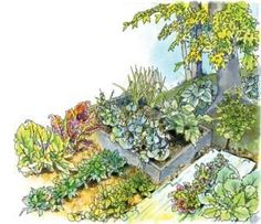 Best Vegetables to Grow in the Shade. For successful growing in the shade, remove low-hanging branches from nearby trees, use raised beds and liners to discourage tree roots from wicking water away from crops, and use reflective mulches to give plants more light.