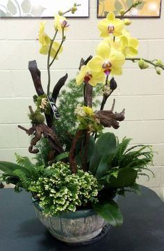 Orchid Container Garden with recipe / Pike Nurseries