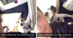 Esta Cadelinha Adora Selfies… E Tem Uma Maneira Especial De Posar Para a Fotografia