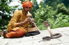 nepal: charmer of snake in India