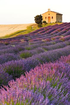 Jump in a car to explore Provence's aromatic purple bloom and hillside villages ©PHB.cz (Richard Semik)/Shutterstock