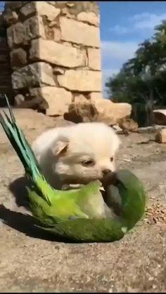 Baby Animals Super Cute, Cute Little Animals, Cute Funny Animals, Funny Dogs, Baby Animals Pictures, Funny Animal Pictures, Animal Pics, Baby Pictures, Cute Animal Videos