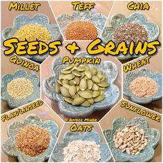 Hermit crab feeding guide - seeds and grains by Amber Miner