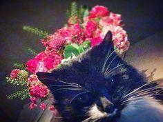 Socks & Roses ... lazy Sunday at home #catsofinstagram #cat #auderghem #