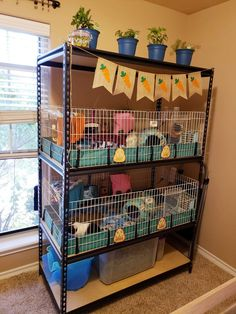 She has storage on botto, & room for two Midwest cages! Guinea Pig Hutch, Guinea Pig House, Pet Guinea Pigs, Guinea Pig Care, Bunny Cages, Rabbit Cages, Indoor Guinea Pig Cage, Cages For Guinea Pigs, Guinie Pig