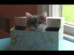 Surprised Kitty meets little kitten