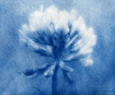 Anna Atkins: born in 1799, she was an English botanist and photographer.