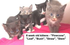 URGENT! Kill Shelter! Pinecone, Leaf, Bush, Straw, and Stem is an adoptable Cat - Domestic Short Hair searching for a forever family at Bladen County Animal Shelter, Elizabethown, NC.