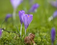images of spring time - Google Search