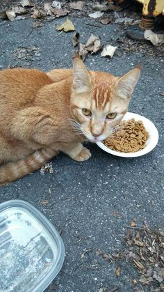 Jennifer Bliesener Jambard shared Marie Couture's post. September 1 at 5:04pm Found cat. This kitty was found on route 5 near mark's motor sports. Enfield Picture in comments ( if unable to view main pic) https://www.facebook.com/groups/1623009267934676/permalink/1690438531191749/